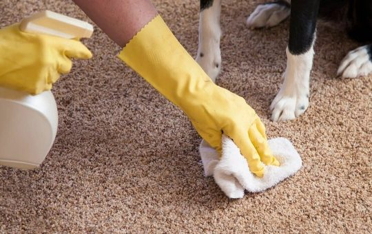 Pet Odor Removal Treatment on Rugs and Upholstery